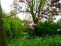 Spring scenery.JPG