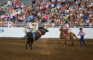 A Bareback bronco rider at the St. Paul Rodeo ...