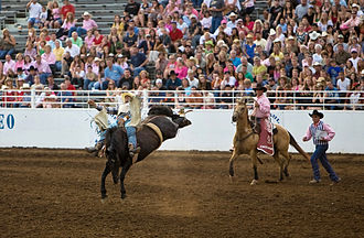 St. Paul, Oregon - Bronco rider at the St. Paul Rodeo
