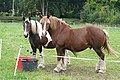 Stable companions - geograph.org.uk - 981416.jpg