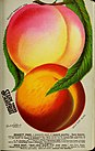 Stark fruits (1896) (19922027244).jpg