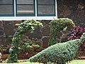 Starr-090417-6164-Ficus pumila-sheared habit in dolpin shape-Pukalani-Maui (24656735490).jpg