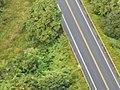Starr-141014-2256-Caesalpinia decapetala-aerial view Hana Hwy-Kakipi Gulch Haiku-Maui (24616689694).jpg
