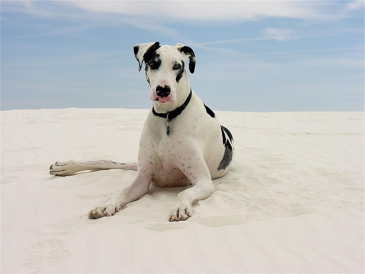 Stella of the Dunes.jpg