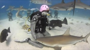 File:Stroking a shark.webm