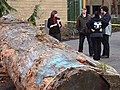 Students Stand by Log for Carving of Native Canoe - Outside First Peoples House - University of Victoria - Victoria, BC - Canada (8469124239).jpg