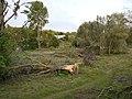 Sturmschaden Mendener Ruhrau 2014.jpg