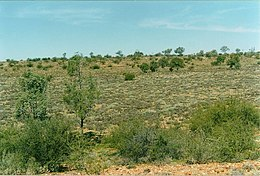 Sturt National Park6 - July01.jpg