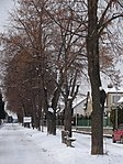 Suchdol - stromořadí lip srdčitých v Gagarinově ulici na Budovci (2).jpg