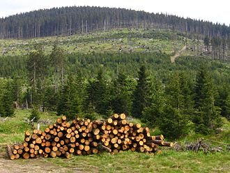 Bark beetle - Forests of Šumava damaged by Ips typographus and clearings after consecutive logging