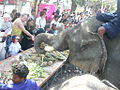 Surin elephants 21.jpg