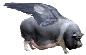 When pigs fly - A doctored photograph showing a winged pig