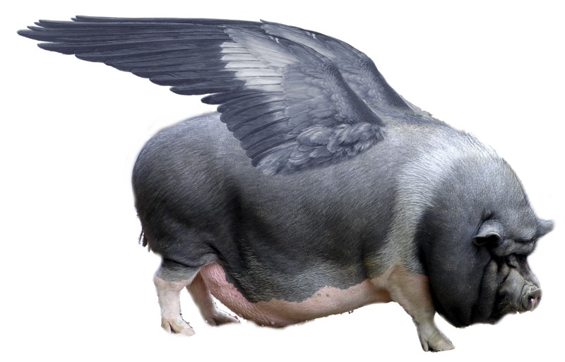 http://upload.wikimedia.org/wikipedia/commons/thumb/9/9e/Sus_scrofa_avionica.png/800px-Sus_scrofa_avionica.png