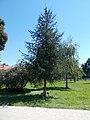 Târgu Mureș twin town memorial tree, Vizslapark, 2020 Zalaegerszeg.jpg