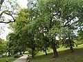 Tabáni Botanikai Tanösvény. Törökmeggy (Prunus mahaleb). - Budapest.JPG