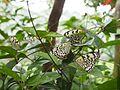 Taipei Zoo (24219580462).jpg