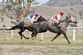 Tambo vallery races 2006 04.jpg