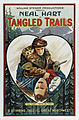 Tangled Trails.jpg