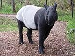 Tapirus indicus 1.jpg