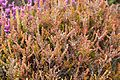 Tatton Park 2015 19 - Heather.jpg