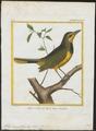 Telophorus gutturalis - 1700-1880 - Print - Iconographia Zoologica - Special Collections University of Amsterdam - UBA01 IZ16600481.tif