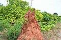 Termite mound in Guinea-Bissau (9085853801).jpg