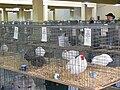 Texas State Fair chicken.jpg