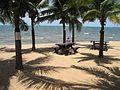 Thailand, Pataya, Palms - panoramio.jpg