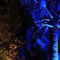 The Blue Trees of San Miguel's - panoramio.jpg