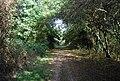 The Eden Valley Walk in Haysden Country Park - geograph.org.uk - 1526658.jpg