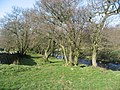 The banks of the River East Allen below The Hagg - geograph.org.uk - 737585.jpg
