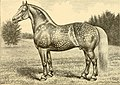 The breeds of live stock, and the principles of heredity (1887) (14780856892).jpg