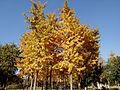 The fall of the Fuyang Park 4.jpg