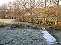 The frosty banks of Acton Burn - geograph.org.uk - 686629.jpg