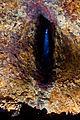 Thrihnukagigur-oko-01.jpg