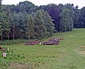 Timber Thinning in Mausoleum Woods - geograph.org.uk - 502914.jpg