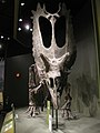 Titanoceratops from the late Cretaceous.jpg