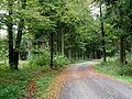 Todtenrode Wald Weg (4).JPG