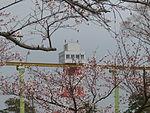 Tokiwa park Sakura.JPG