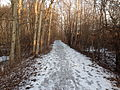 Toronto Eastern Railway track in Courtice.jpg