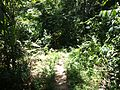 Trail - panoramio (10).jpg