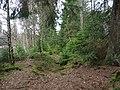 Trail at Silberteich 15.jpg