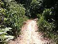 Trail to Waterfall - panoramio (6).jpg