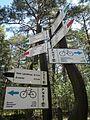 Trails in Bory Tucholskie National Park (6).jpg