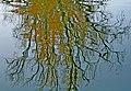 Tree Reflexes (2076827566).jpg