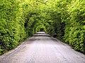 Tree Tunnel - geograph.org.uk - 14600.jpg