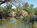 Tree leaning in lake.jpg