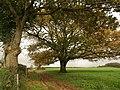 Trees by Pound Lane - geograph.org.uk - 1044582.jpg