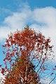 Trees fall colors 2783.jpg