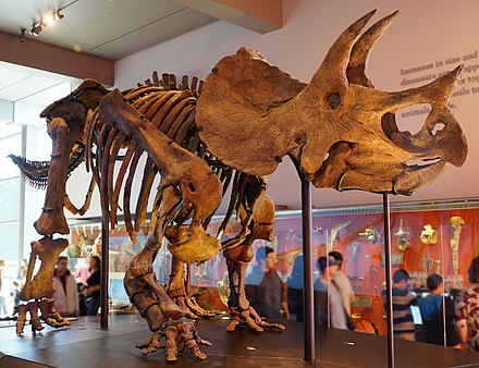 Triceratops mount in the Natural History Museum of Los Angeles County Triceratops mount.jpg